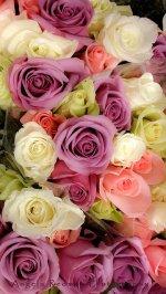 kwiaty na ślub